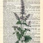 Dictionary Book Page Art pr..