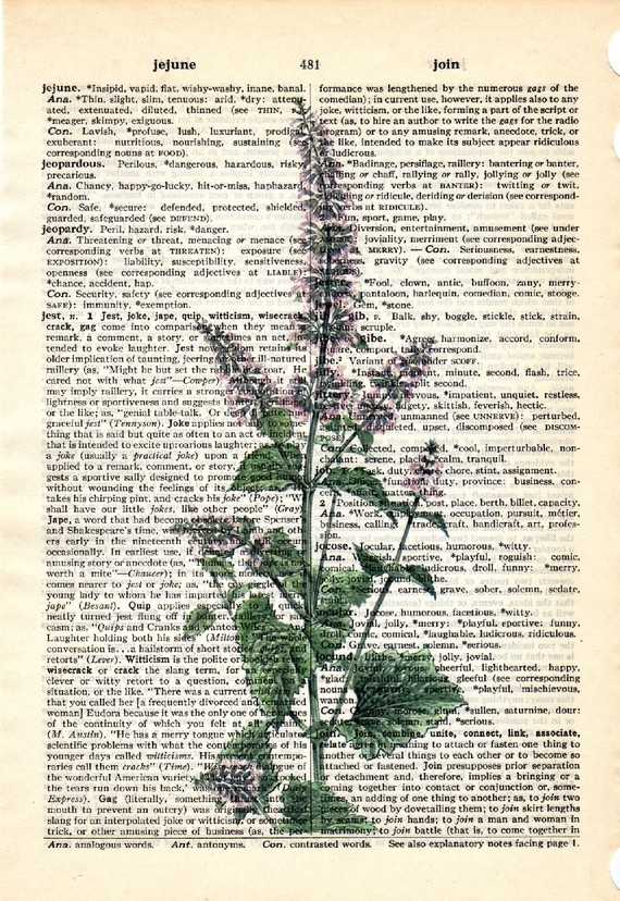 Dictionary Book Page Art print Catnip herb